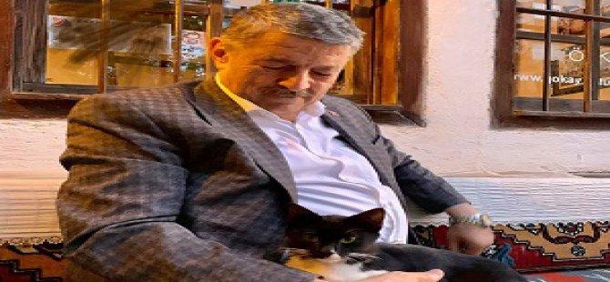 Bartın Belediyesi sokak kedilerine kucak açtı