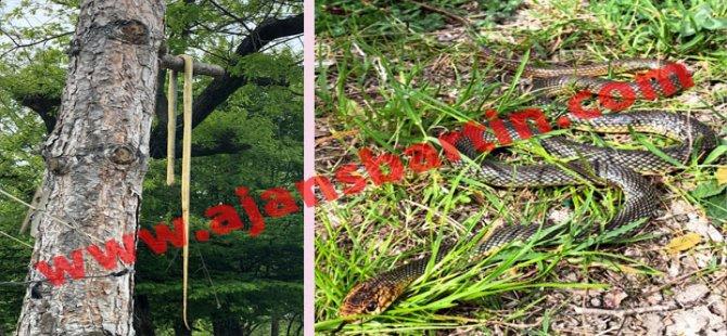 Evin bahçesinden 2 metrelik yılan çıktı