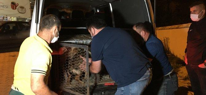 Saltukova Belediyesi Bıraktığı Gibi Köpekleri Geri Topladı
