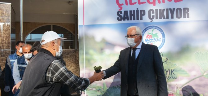 2 Bin 500 Osmanlı Çileği Fidesi Dağıtıldı