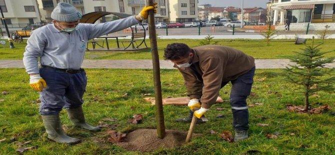 27 Ağaç Toprakla Buluşturuldu