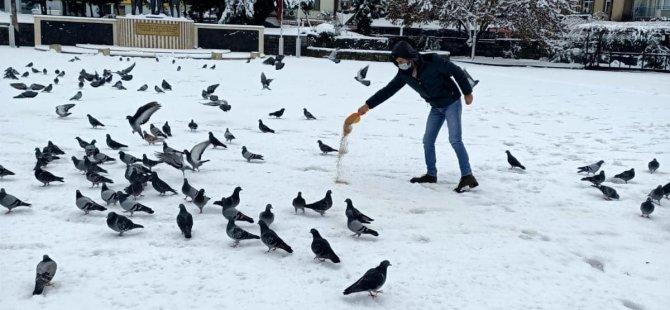 Belediye, Karda Sokak Hayvanlarını Unutmadı
