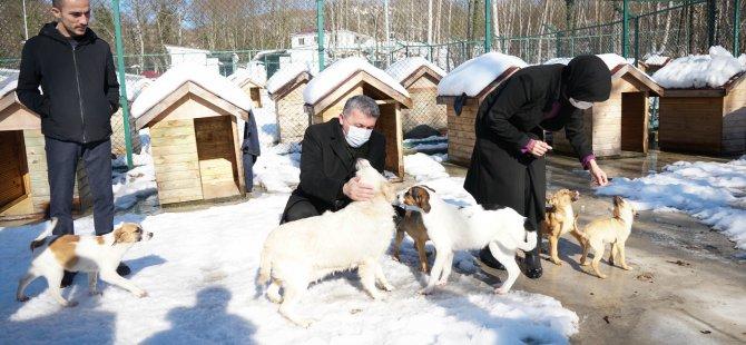 Kalaycı, tüm hayvanseverleri destek olmaya davet etti
