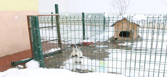 Karantinadaki ailenin kedi ve köpeklerine Belediye sahip çıktı