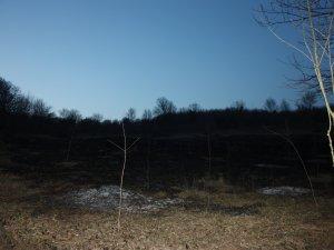 Fındık arazisinde çıkan yangın korkuttu