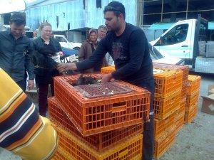 2 bin köy ve yumurta tavuğu dağıtımı yapıldı