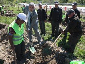 Bartın'da ilk kez kestane bahçesi oluşturuldu