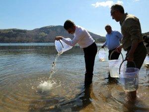 Abant Gölü'ne Alabalık Yavrusu Bırakıldı