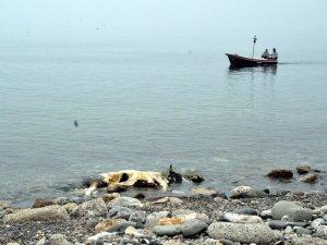 Zonguldak'ta Ölü İnek Kıyıya Vurdu