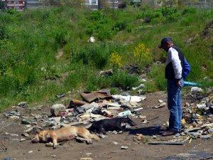 Zonguldak'ta Sokak Köpeklerinin Zehirlendiği İddiası