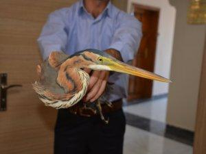 Yaralı Balıkçıl Kuşu Korumaya Alındı