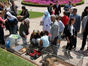 Yavru Kedi Ve Köpekler Sahiplendirildi