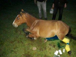 Bolu'da Yaralı Yılka Atı Tedavi Edildi