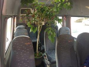 Ağaç dallarının altında seyahat keyfi
