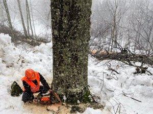 Ağaç Kesme Eğitimi Verildi