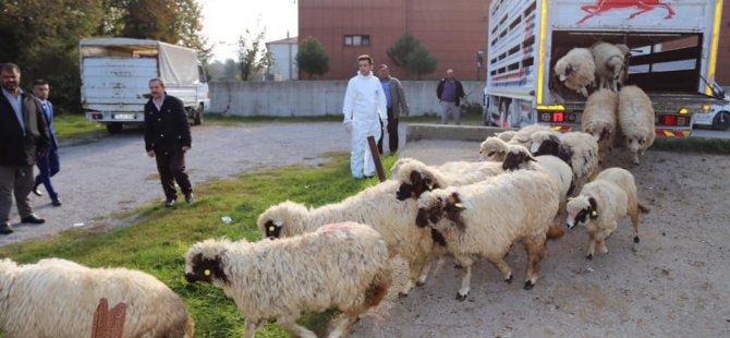 472 genç çiftçiye 14 milyon lira hibe desteği verdik