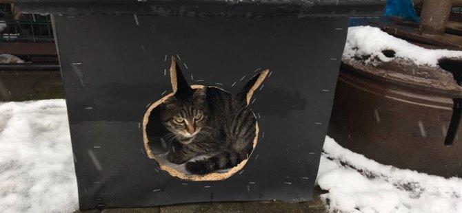'Sokaktaki Kediler Üşümesin' diye dükkanın önüne yuva yaptılar