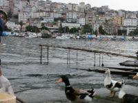 Evden çıkamayan 65 yaş üstündeki vatandaşın ördeklerine belediye bakıyor