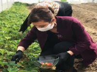 Belediyeden tarıma tam destek
