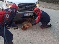 Araç Altına Sıkışan Köpeği Kurtardılar