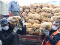 Belediye 30 ton patates dağıtıyor