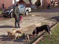 Kumluca Belediyesi Sokak Hayvanlarını Unutmadı