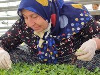 Belediye Tarımsal Faaliyetlere Öncülük Ediyor