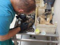 Yavru Köpekler Zifte Yapışık Halde Bulundular