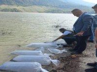 Baraja 85 bin sazan balığı bırakıldı