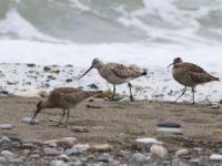 Kuş Popülasyonunda Yeni Türler