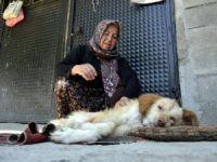 """Felçli Köpeği Hayatta Tutan """"Anne"""" Sevgisi"""