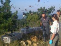 Bolu'da Kınalı Keklikler Doğayla Buluştu