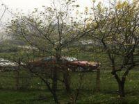 Erik ağacı mevsimi şaşırdı